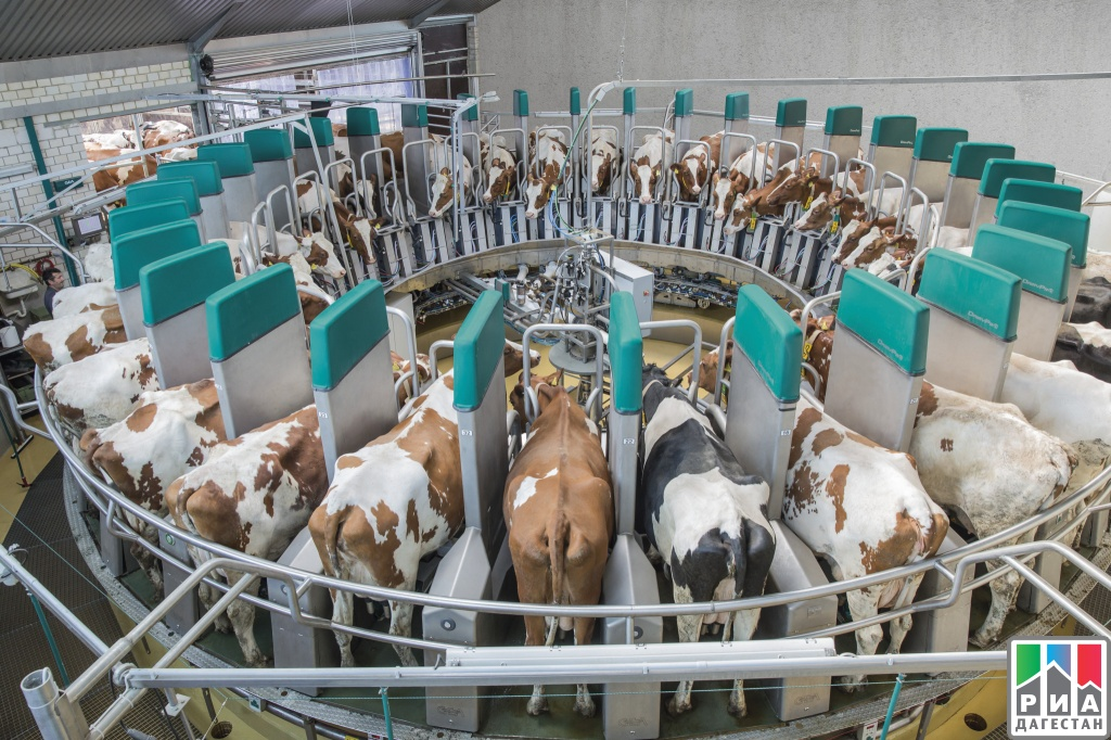 Dairy farming in india project report